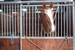 box-interieur-pension-cheval-haras-de-la-bleiche-ergersheim-bas-rhin-alsace-01.jpg