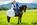 marié-cheval-frison-photographie-shooting-séance-mariage-couple-bisous-chatenois-thomasstoehr-photographe-equin-bas-rhin-alsace