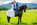 mariage-cheval-frison-dolf-photographie-shooting-séance-couple-bisous-chatenois-thomas-stoehr-photographe-equin-bas-rhin-alsace