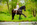 mariage-cheval-piaffé-frison-dolf-robe-mariée-photographe-equin-alsace-chatenois-thomas-stoehr-bas-rhin