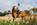 Shooting-photo-Chloé-photographe-equestre-strasbourg-bas rhin-alsace-thomasstoehr