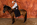 photographie-art-cheval-fond-marron-tir-à-arc-TAC-martin-saphir-equitation-thomas-stoehr-photographe-equin-bas-rhin-alsace.jpg
